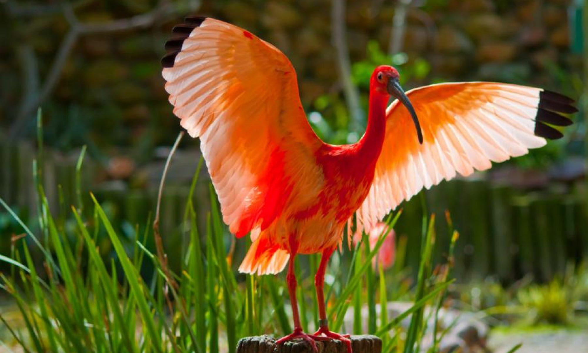 Praktijk ibis